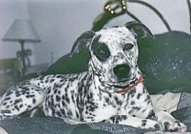 deaf dogs in arizona profiles