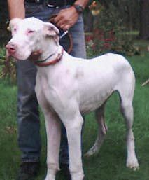 deaf dogs in Illinois - profiles