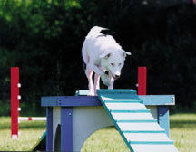 Woof practicing agility