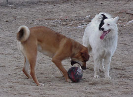 Rowdy hangs out with Turbo, who is trying to fit a basketball in his mouth!